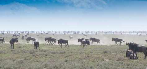 WHAT 3 MILLION WILDEBEESTS TAUGHT ME ABOUT RECEIVING