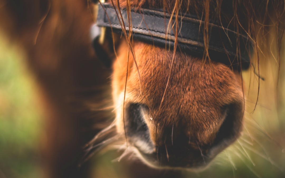 WHAT CAN HORSES TEACH US ABOUT INTIMACY?